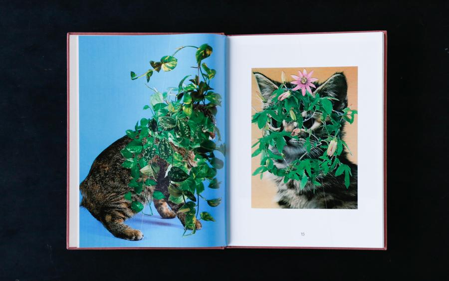 cat book-3