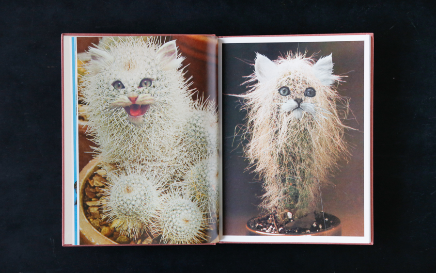 cat book-5